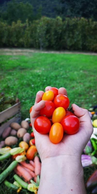 Prodotti freschi biologici coltivati in Campania