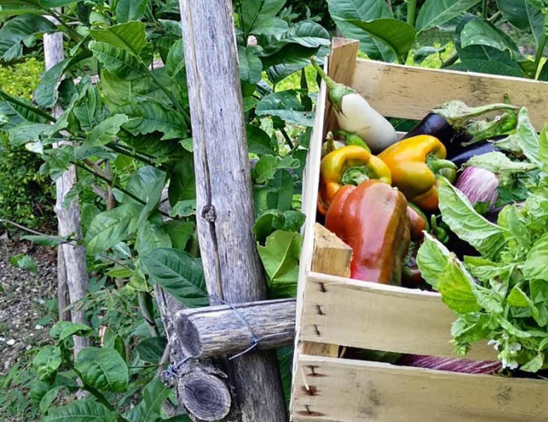 Prodotti Biologici Online Vendita Di Verdure E Ortaggi Freschi