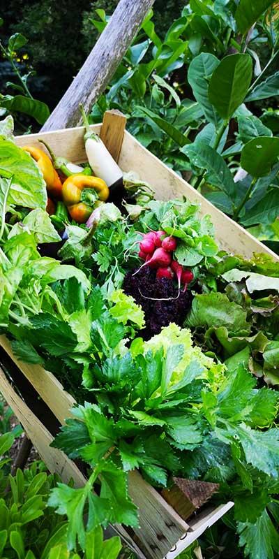 Vendita online di prodotti biologici in Campania