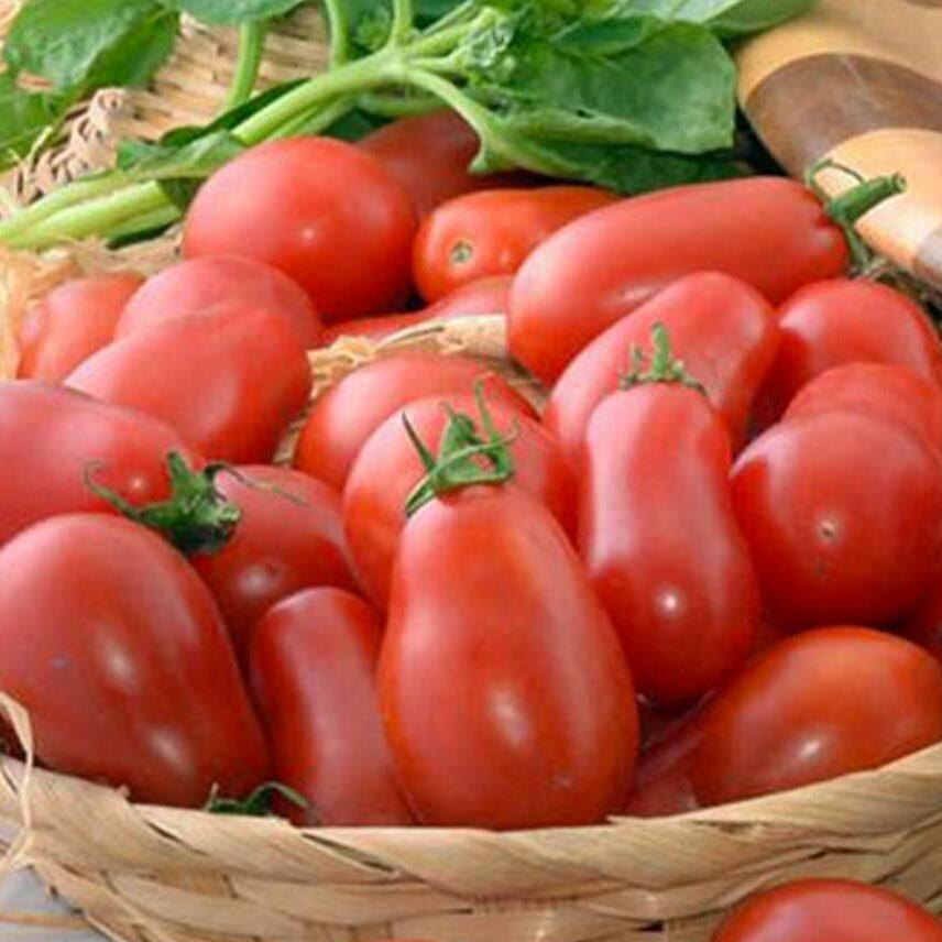 Pomodoro corbarino della Campania in cesto di paglia