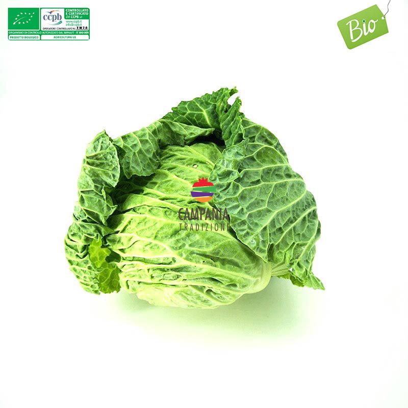 Verza biologica vendita online