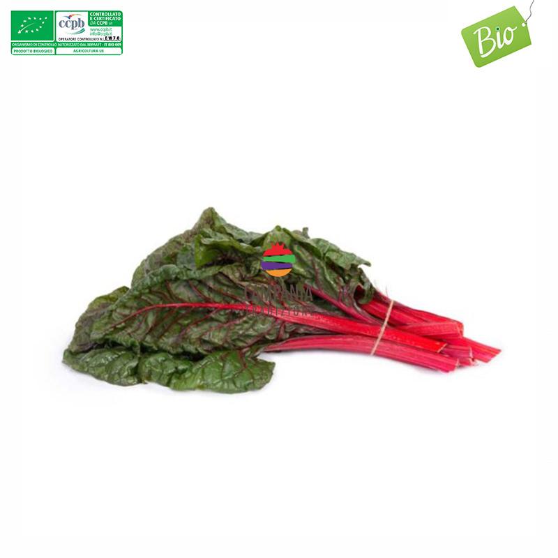 Bietolina rossa biologica Campania Tradizione
