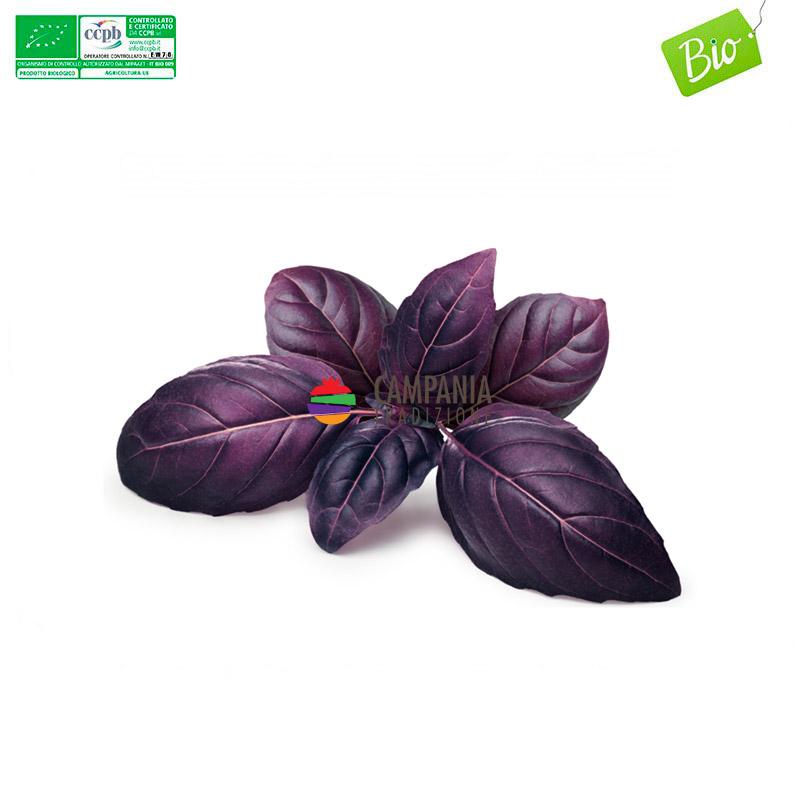 Basilico Viola Biologico Campania Tradizione Vendita Online